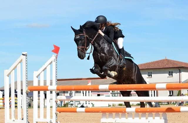 Préparation physique équitation - saut d'obstacles