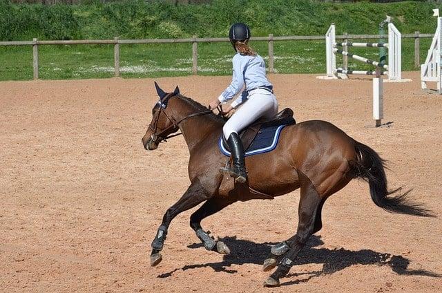 Préparation physique équitation - saut d'obstacles 2