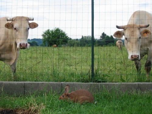 protéines végétales ou animaux en liberté