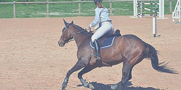 Préparation physique équitation à faire à la maison