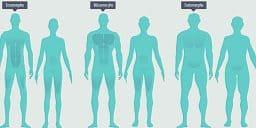 type de morphologie
