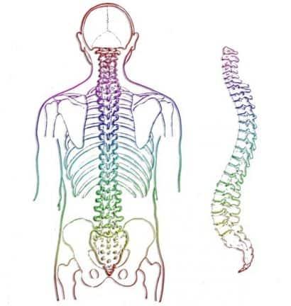 Courbure naturelle colonne vertébrale